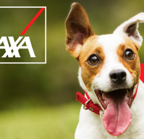 AXA – A Dog-Friendly Home