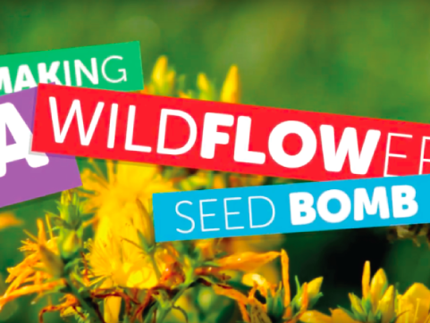 Chadwicks – Wildflower Seed Bomb